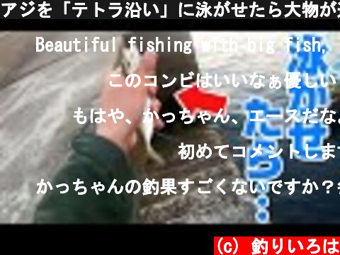 アジを「テトラ沿い」に泳がせたら大物が連発した‼  (c) 釣りいろは
