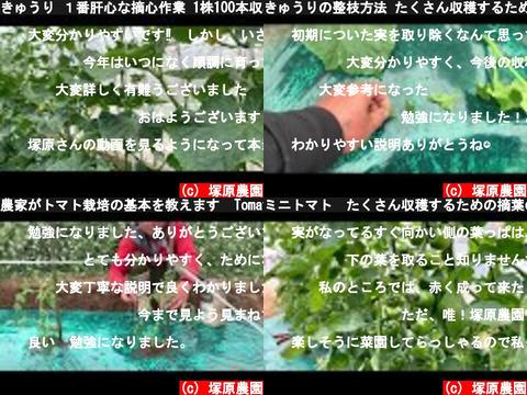 塚原農園(おすすめch紹介)