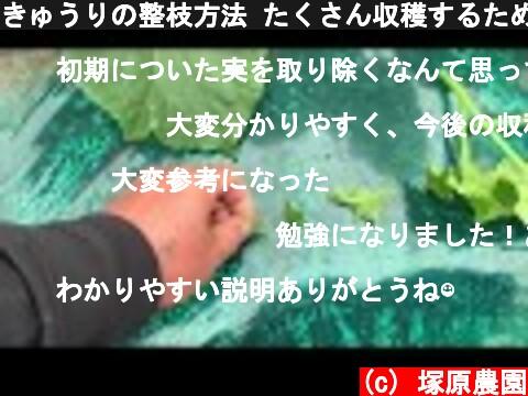 きゅうりの整枝方法 たくさん収穫するための大切な準備 19/4/30  (c) 塚原農園