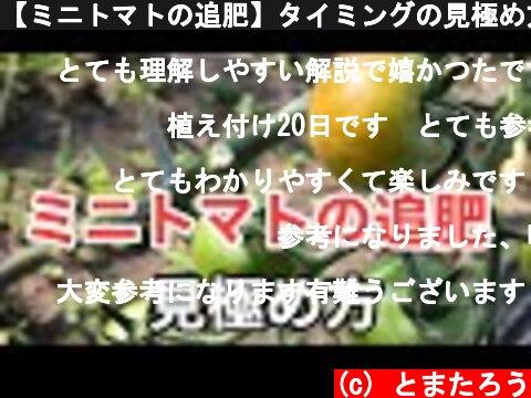 【ミニトマトの追肥】タイミングの見極め方と肥料  (c) とまたろう