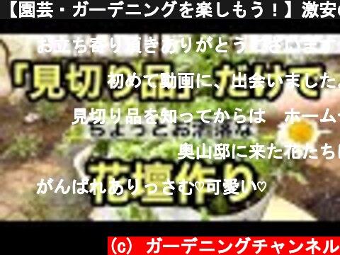 【園芸・ガーデニングを楽しもう!】激安の見切り品だけでオシャレな花壇を作る動画です。  (c) ガーデニングチャンネル