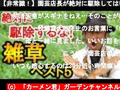 【非常識!】園芸店長が絶対に駆除してはいけない雑草を教えます!雑草退治にお困りの方。究極の雑草対策を伝授します。明日から雑草が宝に。雑草駆除  japan garden weed control  (c) 「カーメン君」ガーデンチャンネル