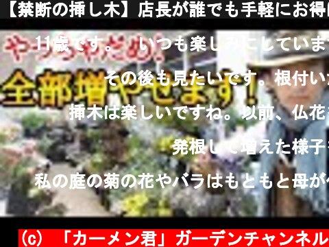 【禁断の挿し木】店長が誰でも手軽にお得にガーデニングを楽しめる植物の増やし方を教えます 他言厳禁です! japan garden gardening plant cutting  (c) 「カーメン君」ガーデンチャンネル