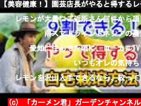 【美容健康!】園芸店長がやると得するレモン栽培を教えます!初心者でもベランダでも自宅でレモンが育てれる 大量消費レシピ 2倍採れる種類も japan garden lemon cultivation  (c) 「カーメン君」ガーデンチャンネル