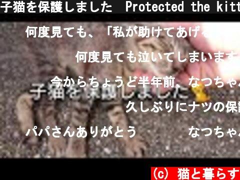 子猫を保護しました  Protected the kitten  (c) 猫と暮らす