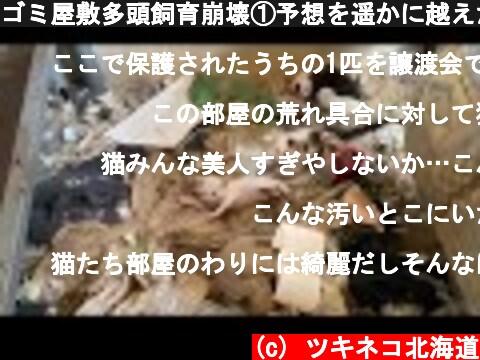 ゴミ屋敷多頭飼育崩壊①予想を遥かに越えた現場。信じられないゴミと糞尿の蓄積の室内に住む52匹の猫  (c) ツキネコ北海道
