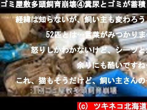 ゴミ屋敷多頭飼育崩壊④糞尿とゴミが蓄積した現場の52匹全頭保護までの様子【まとめ】  (c) ツキネコ北海道
