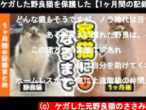 ケガした野良猫を保護した-1ヶ月間の記録-(おすすめ動画)