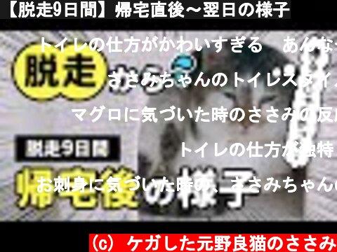 元野良猫脱走9日間直後の様子(おすすめ動画)