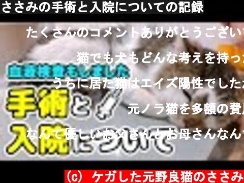 元野良猫の手術と入院についての記録(おすすめ動画)