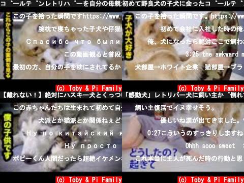 Toby & Pi Family(おすすめch紹介)
