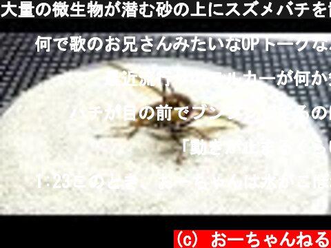 大量の微生物が潜む砂の上にスズメバチを置いたら衝撃の結果に...  (c) おーちゃんねる