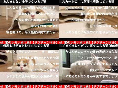 猫のレモンまにあ!【サブチャンネル】(おすすめch紹介)