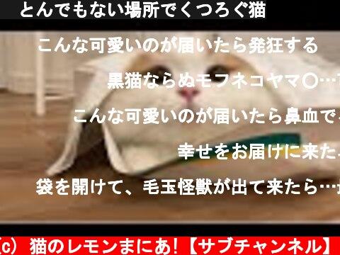 🍋とんでもない場所でくつろぐ猫  (c) 猫のレモンまにあ!【サブチャンネル】