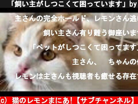 🍋「飼い主がしつこくて困っています」byレモン  (c) 猫のレモンまにあ!【サブチャンネル】