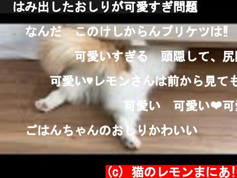 🍋はみ出したおしりが可愛すぎ問題  (c) 猫のレモンまにあ!