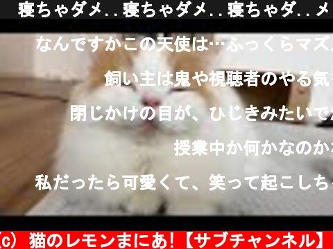 🍋寝ちゃダメ..寝ちゃダメ..寝ちゃダ..メ...グゥゥ  (c) 猫のレモンまにあ!【サブチャンネル】