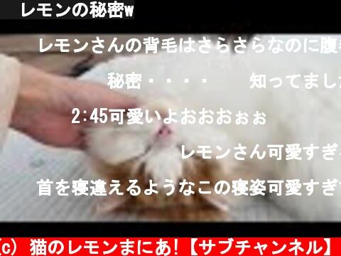 🍋レモンの秘密w  (c) 猫のレモンまにあ!【サブチャンネル】