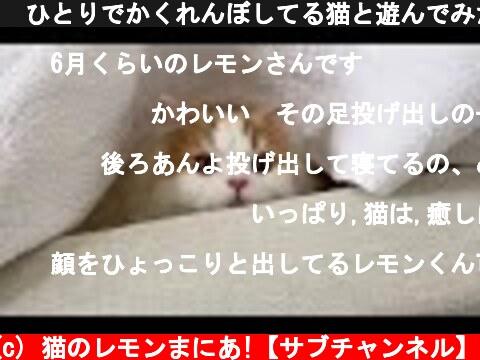 🍋ひとりでかくれんぼしてる猫と遊んでみた  (c) 猫のレモンまにあ!【サブチャンネル】