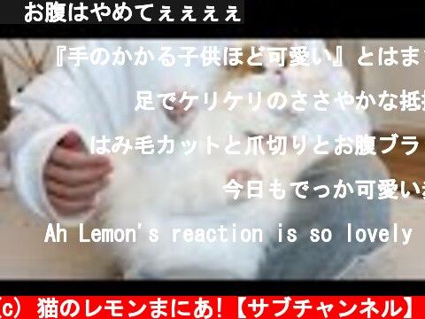 🍋お腹はやめてぇぇぇぇ  (c) 猫のレモンまにあ!【サブチャンネル】