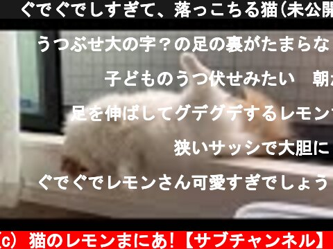 🍋ぐでぐでしすぎて、落っこちる猫(未公開動画)  (c) 猫のレモンまにあ!【サブチャンネル】