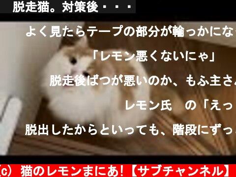 🍋脱走猫。対策後・・・  (c) 猫のレモンまにあ!【サブチャンネル】