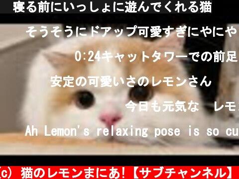 🍋寝る前にいっしょに遊んでくれる猫  (c) 猫のレモンまにあ!【サブチャンネル】