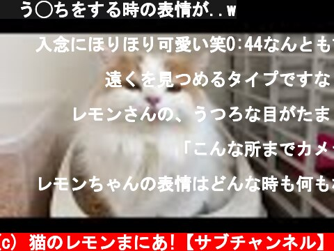 🍋う◯ちをする時の表情が..w  (c) 猫のレモンまにあ!【サブチャンネル】