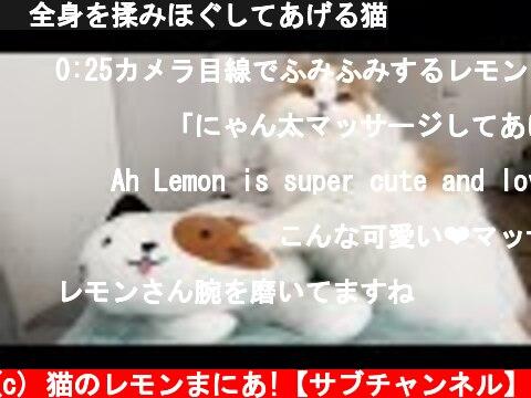 🍋全身を揉みほぐしてあげる猫  (c) 猫のレモンまにあ!【サブチャンネル】