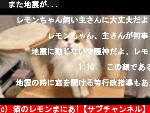 🍋また地震が...  (c) 猫のレモンまにあ!【サブチャンネル】