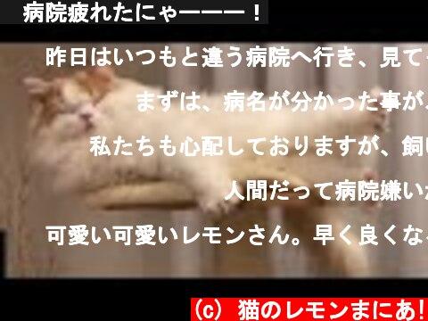 🍋病院疲れたにゃーーー!  (c) 猫のレモンまにあ!