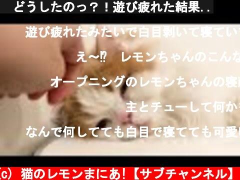 🍋どうしたのっ?!遊び疲れた結果..  (c) 猫のレモンまにあ!【サブチャンネル】