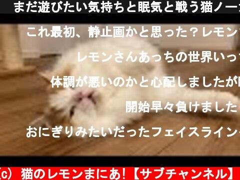 🍋まだ遊びたい気持ちと眠気と戦う猫ノーカット(笑ったら負け)  (c) 猫のレモンまにあ!【サブチャンネル】