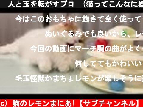 🍋人と玉を転がすプロ (猫ってこんなに器用なの?w)  (c) 猫のレモンまにあ!【サブチャンネル】