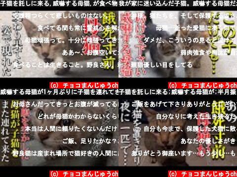 チョコまんじゅうch(おすすめch紹介)