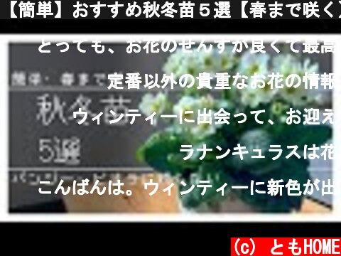【簡単】おすすめ秋冬苗5選【春まで咲く】  (c) ともHOME