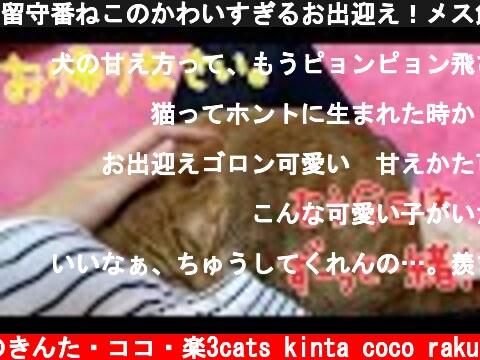 留守番ねこのかわいすぎるお出迎え!メス飼い主編!  (c) 猫のきんた・ココ・楽3cats kinta coco raku
