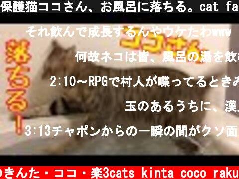 保護猫ココさん、お風呂に落ちる。cat fall in the bath  (c) 猫のきんた・ココ・楽3cats kinta coco raku