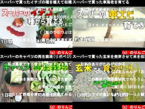 のりんご(おすすめch紹介)
