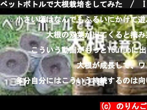 ペットボトルで大根栽培-育て方-(おすすめ動画)