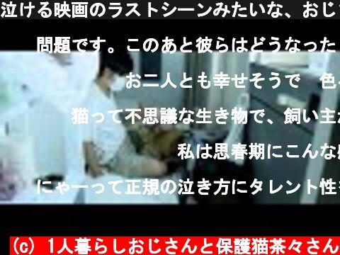 泣ける映画のラストシーンみたいな、おじさんと茶々さん  (c) 1人暮らしおじさんと保護猫茶々さん