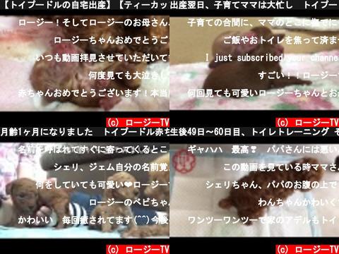 ロージーTV(おすすめch紹介)