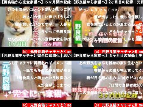 元野良猫チャチャとR me(おすすめch紹介)