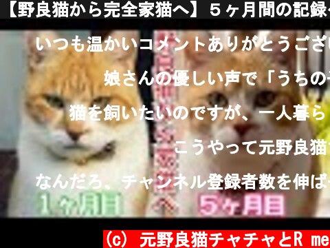 【野良猫から完全家猫へ】5ヶ月間の記録〜総まとめ|目つきが激変!完全に家猫になった元野良猫チャチャ  (c) 元野良猫チャチャとR me