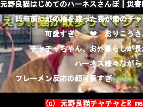 元野良猫はじめてのハーネスさんぽ|災害時にも慣れておきたいハーネス|Cat walk  (c) 元野良猫チャチャとR me