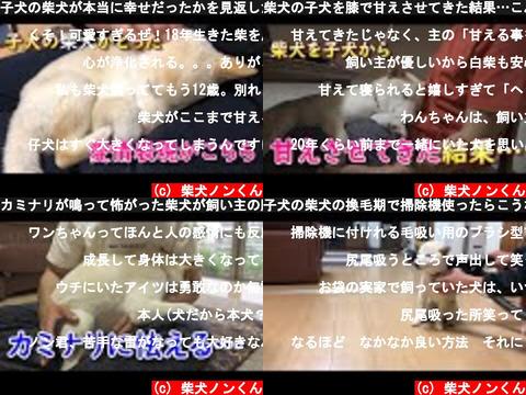 柴犬ノンくん(おすすめch紹介)