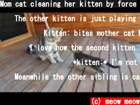 Mom cat cleaning her kitten by force  (c) meow meow