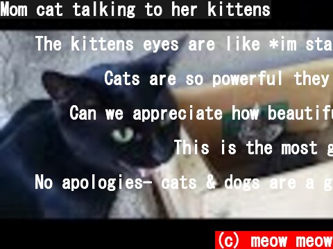 Mom cat talking to her kittens  (c) meow meow
