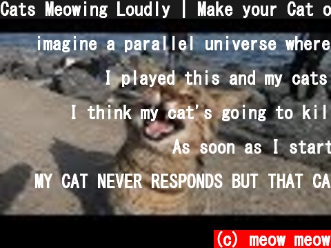 Cats Meowing Loudly | Make your Cat or Dog Go Crazy  (c) meow meow