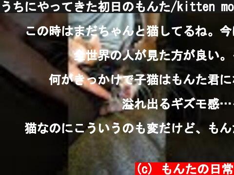 うちにやってきた初日のもんた/kitten movie  (c) もんたの日常